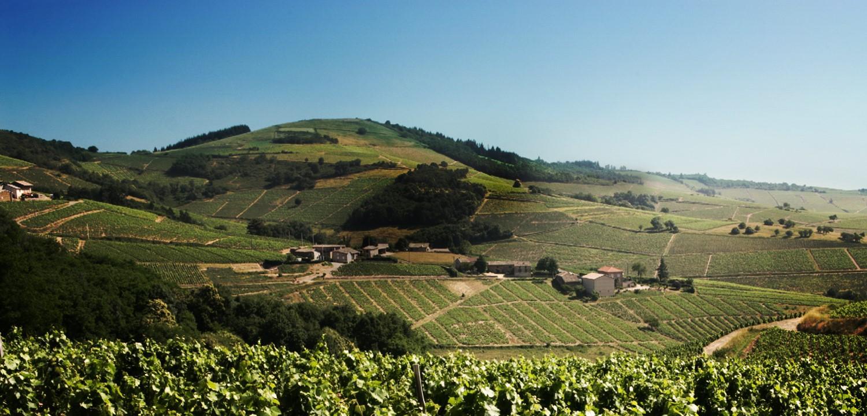 Vin beaujolis